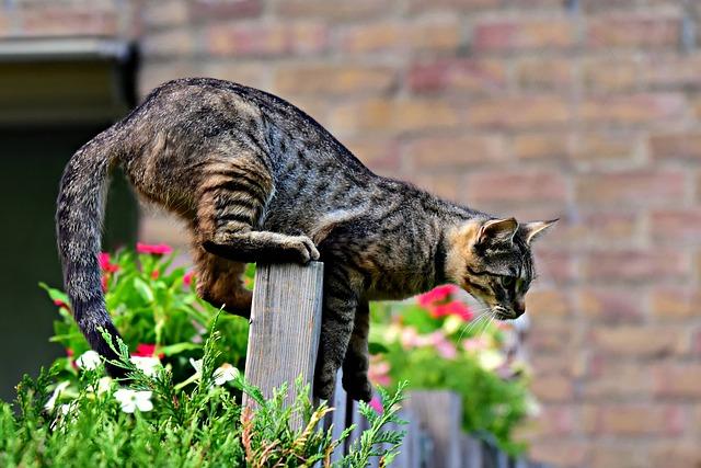 cat-3652662_640