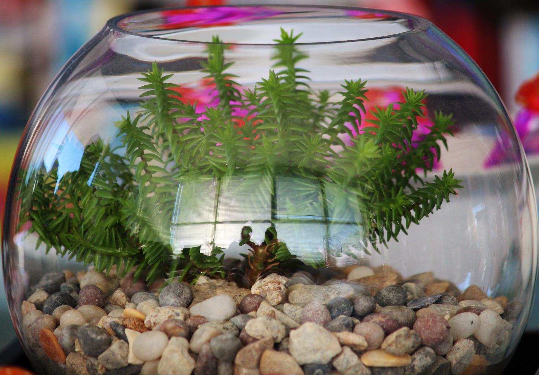 rostlina ve skle